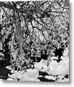 Infrared Indian River State College Hendry Campus #8 Metal Print