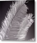 Infrared Palm Frond Metal Print