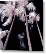 Infrared Palm Trees Metal Print