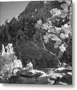 Infrared Photo Of A Twisted Pine Tree Metal Print