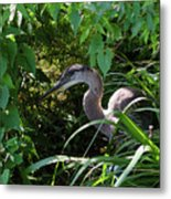 Injure Blue Heron Metal Print