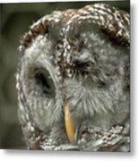 Injured Owl Metal Print