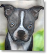 Innocent Stare Metal Print