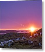 Inquisitive Flock At Dawn, Harris Metal Print
