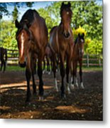Inquisitive Horses Metal Print