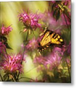 Insect - Butterfly - Golden Age  Metal Print
