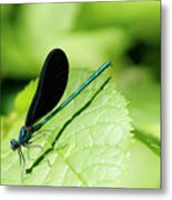 Insect Metal Print