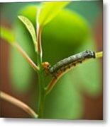 Insect Larva 5 Metal Print