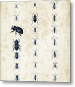 Insects - 1832 - 09 Metal Print