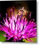 Insects Up Close Metal Print