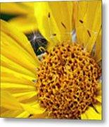 Inside Sunflower Metal Print