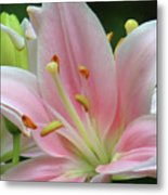 Inside The Lily  Metal Print