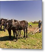Instructing The Horses Four  Metal Print