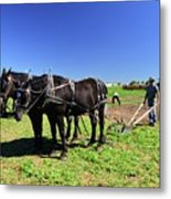 Instructing The Horses Two  Metal Print