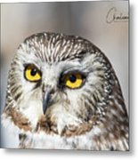 Intense Look Metal Print