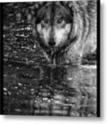 Intense Reflection Metal Print