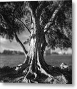 Intercoastal Pine Metal Print