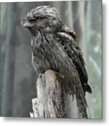Interesting Tawny Frogmouth Perched On A Tree Stump Metal Print