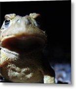 Interrogation Of A Toad Metal Print