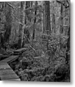 Into A Magical World Black And White Metal Print