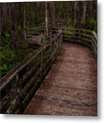 Into Audubon Corkscrew Swamp Sanctuary Metal Print