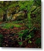 Into The Forest Of Fontainebleau Metal Print