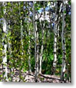 Into The Forrest Metal Print