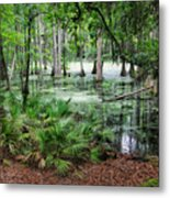Into The Green Swamp Metal Print