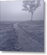 Into The Mist Bw Metal Print by Steve Gadomski