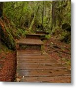 Into The Rainforest Metal Print