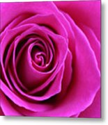 Into The Rose Metal Print