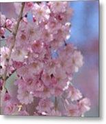 Into The Sakura - Japanese Cherry Blossom Metal Print