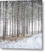 Into The Woods 3 - Winter At Retzer Nature Center  Metal Print
