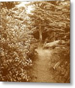 Into The Woods Sepia Metal Print