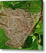 Intricate Nest Metal Print