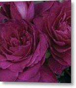 Intrigue Rose Metal Print