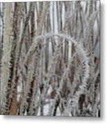 Intriguing Winter Frost Metal Print