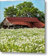 Poppy Invasion In Hillcountry-texas Metal Print