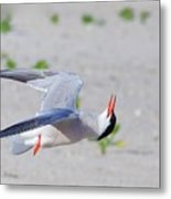 Inverted Flight Metal Print