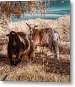 Invisible Lives Metal Print