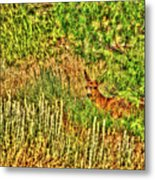 Invisible Nature One Surreal C Metal Print