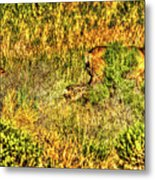Invisible Nature Three Surreal C Metal Print