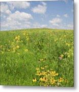 Iowa Summer Flowers I Metal Print