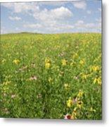 Iowa Summer Flowers II Metal Print