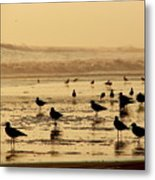 Iquique Chile Seagulls  Metal Print