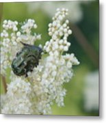 Iridescent Insect Metal Print