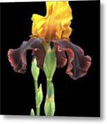 Iris 3 Metal Print