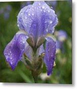 Iris After Rain Metal Print