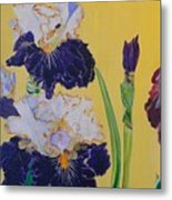 Iris Afternoon Delight Metal Print