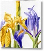 Iris And Flag Metal Print
